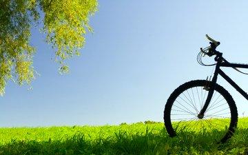 derevo, l, derevya, nastroenie, nastroeniya, velosipedy