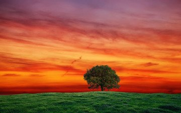 небо, трава, дерево, закат, пейзаж, поле