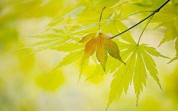 свет, природа, листья, листва, осень