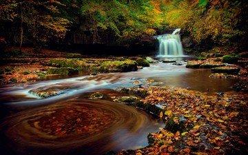 природа, лес, водопад, осень, англия, йоркшир