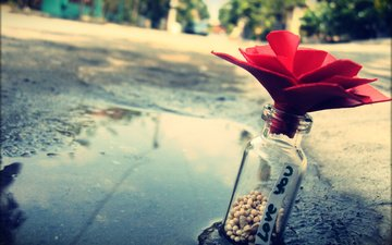 камни, макро, цветок, улица, любовь, бутылка, лужа, записка, признание, cvetok, butylka, luzha, bumazhnyj