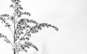 cvetok, sneg, zima, beloe