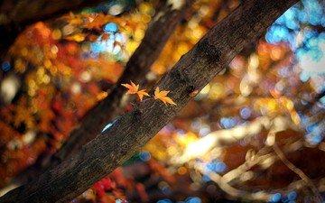 свет, природа, дерево, листья, лучи, ветки, ветви, осень, размытость, боке