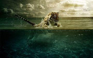 тигр, вода, прыжок, движение