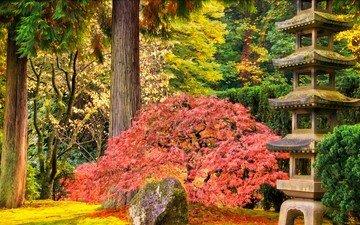 деревья, природа, парк, кусты, осень