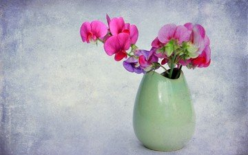 цветы, фон, букет, ваза, орхидея