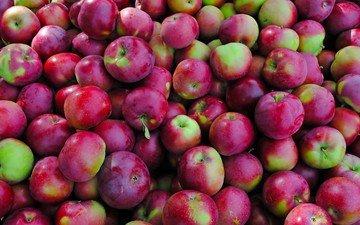 фрукты, яблоки, много, красно-зеленые