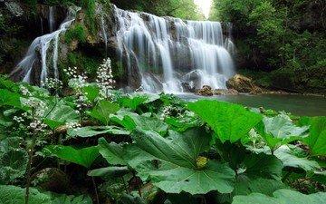 деревья, растения, лес, листья, водопад, речка