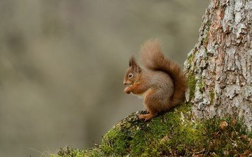 tree, animals, moss, protein, tail, squirrel