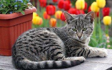 цветы, кот, кошка, лежит, полосатый
