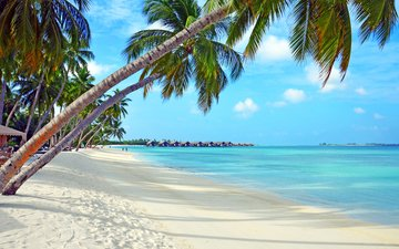 sea, beach, stay, tropics, the maldives