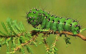 макро, насекомые, растение, гусеница