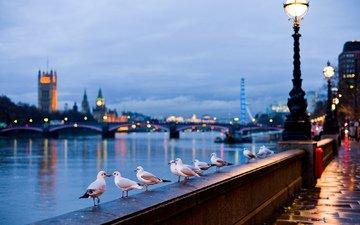 лондон, птицы, англия, набережная, чайки, купола