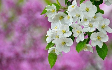 цветы, ветка, природа, цветение, фон, весна