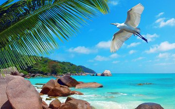 СеШельские Острова - Страница 6 D1c2d464b6c090c