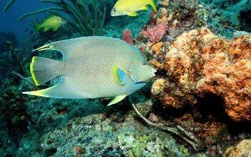 море, рыбы, кораллы, подводный мир