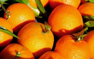 фрукты, листики, мандарины, цитрусы