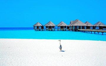 море, пляж, отдых, бунгало, птичка, тропики, мальдивы