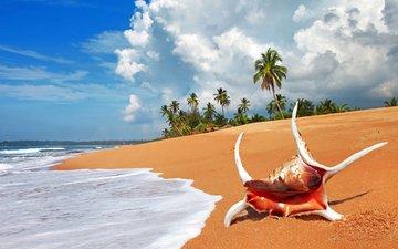 море, пляж, тропики, раковина