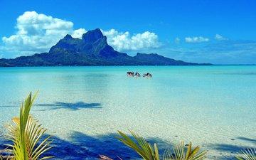 море, отдых, остров, тропики
