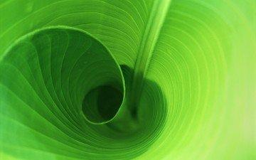 зелень, листок