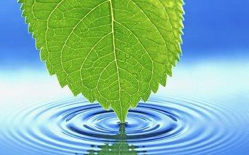вода, макро, лист