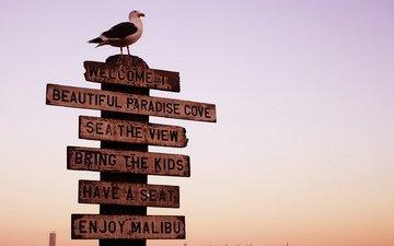 фон, птица, знак