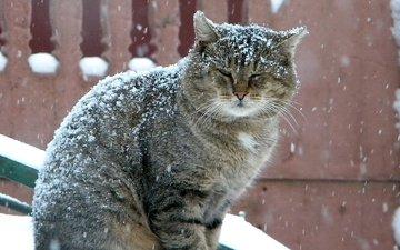 зима, кот, серый, большой, снегопад