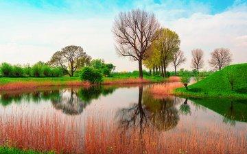 природа, англия, весна, май