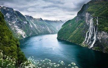 горы, полевые цветы, фьорды, дикие цветы, норвегии, fjord, рек, норвежский