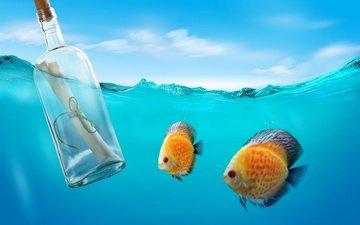 sea, message, bottle, letter, underwater