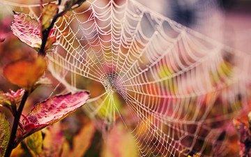 ветка, природа, листья, капли, осень, паутина, макро _