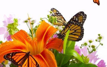 цветы, лилия, букет, бабочки, оранжевая