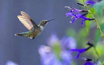 животное, летают, птаха