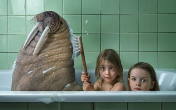 animals, children, humor, bath, walrus