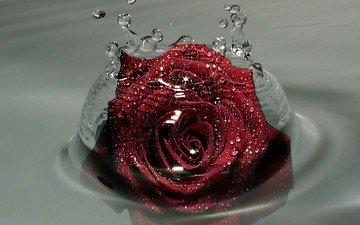 вода, капельки, красная роза