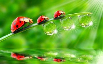 green, background, ladybug, stem, three, trio