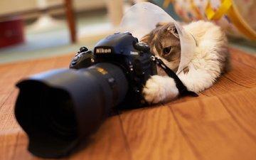 кот, никон, аппарат