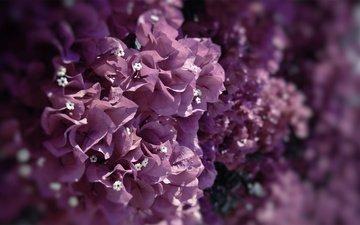 цветы, природа, фокус камеры, макро, лепестки, краски, цветы