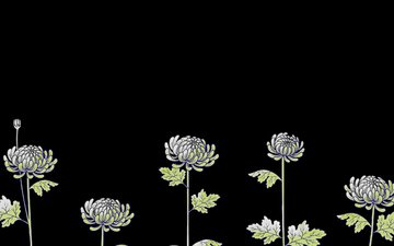 flowers, figure, black background