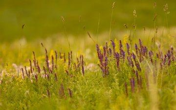 свет, цветы, трава, природа, поле, лето