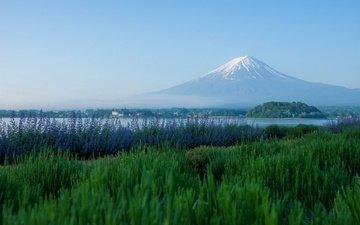 лаванда, гора, япония, луг, вулкан, фудзи, японии, фудзияма, озеро кавагути, гора фудзи