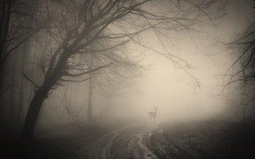 деревья, лес, деревь, ландшафт, на природе, жуткий, оленей, туманный