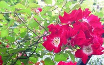 цветы, парк, питер