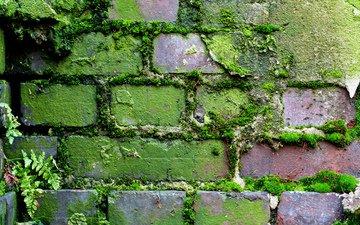 узор, стена, кирпич, moss (узор, мох)