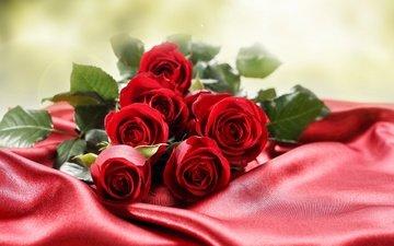 цветы, макро, фото, розы, красный фон