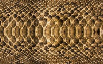 текстура, змея, кожа, расцветка, чешуя