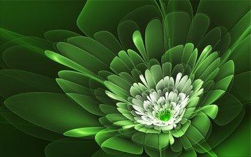линии, зелёный, цветок, лепестки