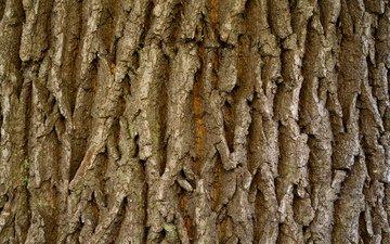 дерева, мрачный, естественная, бурые, дерево