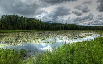река, лес, тучи, пейзаж, аляска